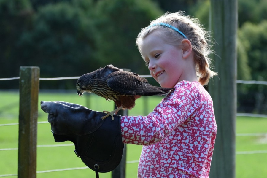 Estella with a New Zealand falcon at Wingspan in Rotorua.