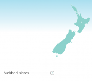 The Auckland Islands are South of New Zealand, between here and Antarctica!