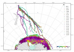 Lines showing movement of humpbacks down to Antarctica.