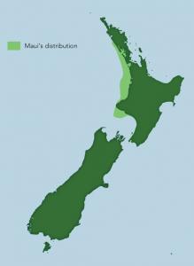 mauisdistribution