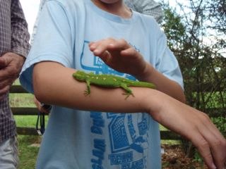 Oscar with a green gecko (Photo by Megan Norris)