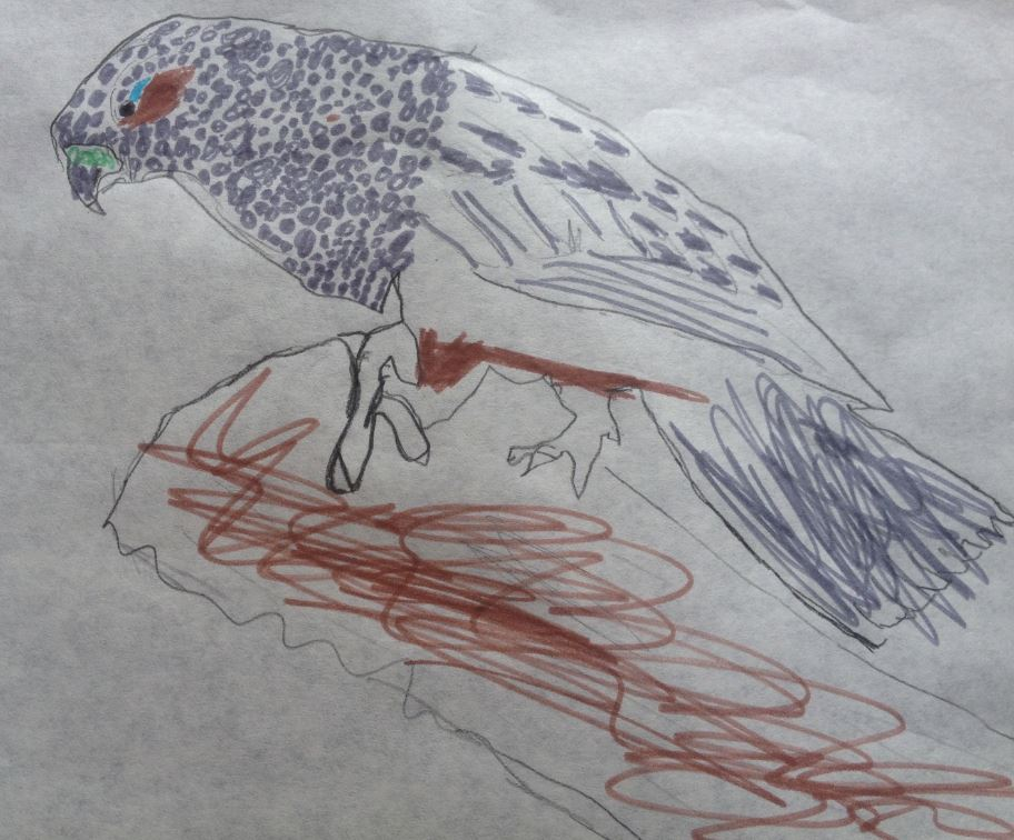 "Kaka, by Calexico (aged 6). ""This is a kaka that i drew. I liked drawing the picture and finding out what it looked like by looking at a real picture of one and it was real fun finding out how to do it and what to do."""