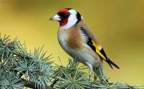 Are You Ready for Garden Bird Survey?