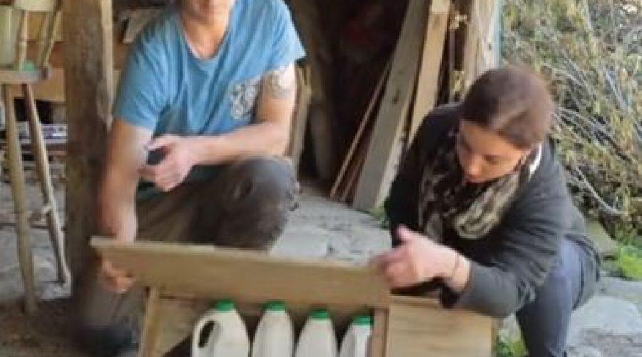 Te Papa's Penguin Box Design Challenge video