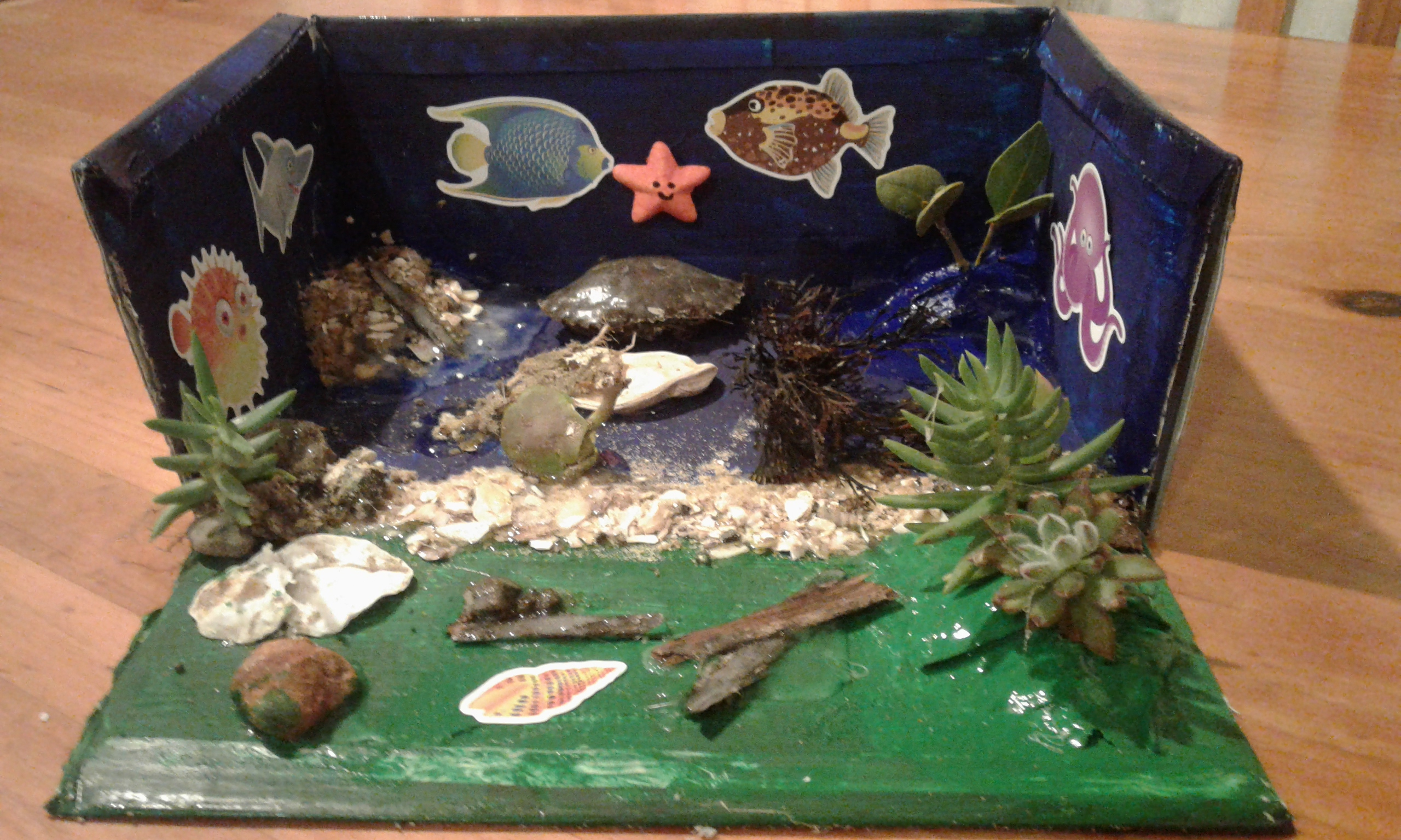 The shells, sand, mangroves, driftwood, crab etc. are all from the Kaipara Harbour where we live. By Sam