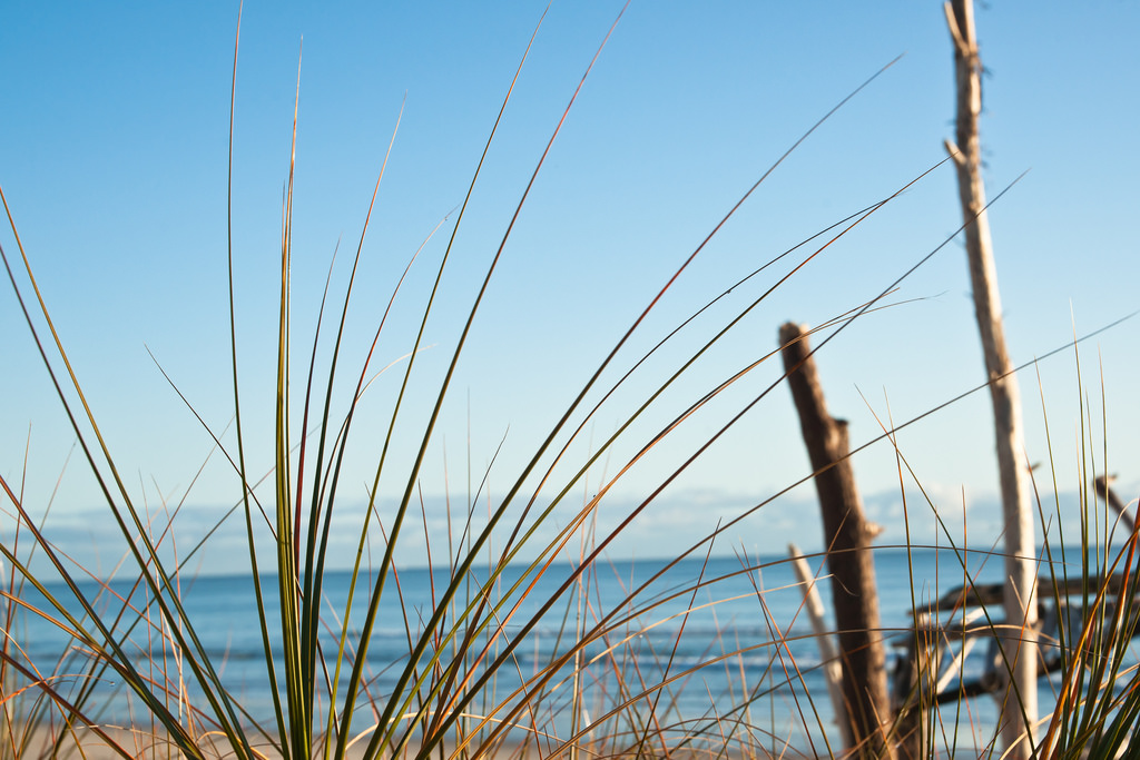 Dune Planting day in Papamoa