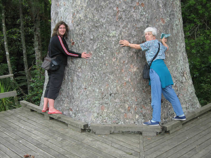 Meet the Giants at Parry Kauri Park