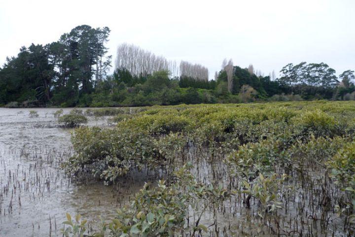 Matua's Marvellous Mangroves