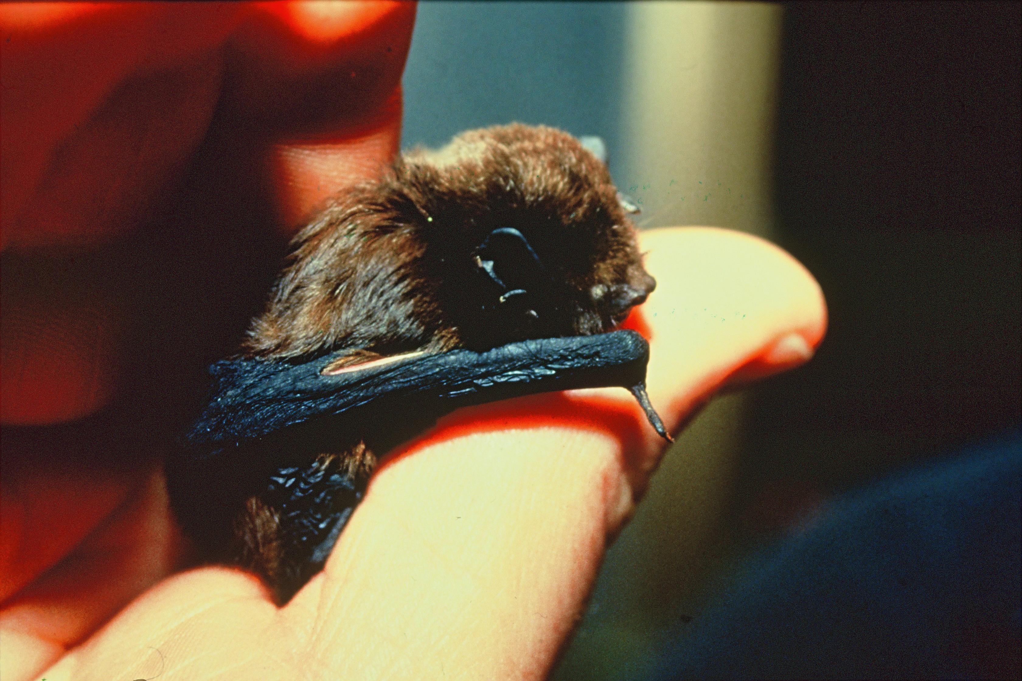 Bats at Balls Clearing