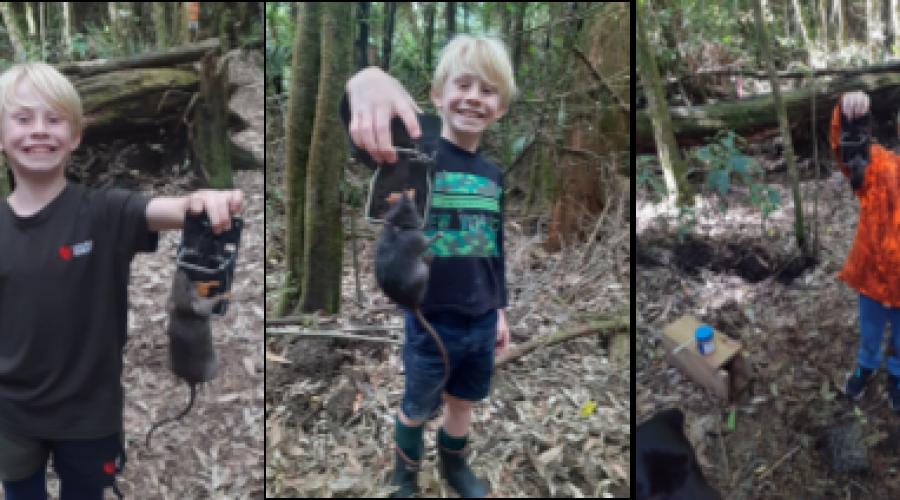 My Predator Free journey in Whakarewarewa Forest