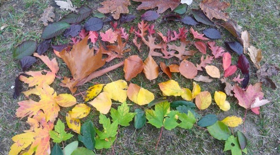 Our Leaf Rainbows