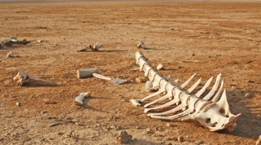 Nothing but bones