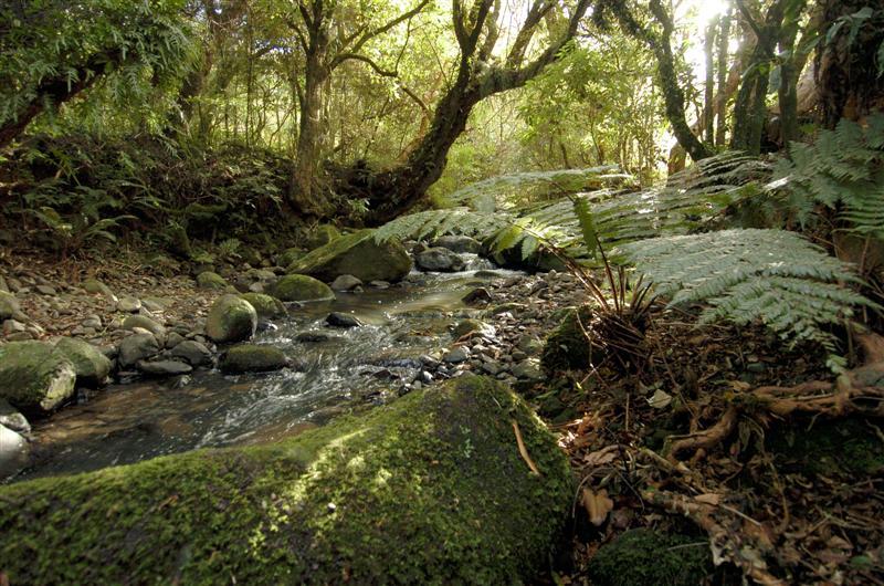 Wonderful rivers and their inhabitants